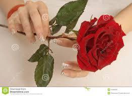 beautiful nails and roses royalty free stock photo image 12338545