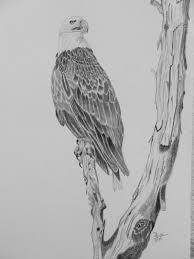 bald head eagle wetcanvas