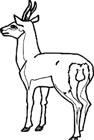 antelope back view coloring page wecoloringpage