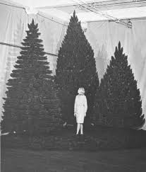 christmas trees forest history society