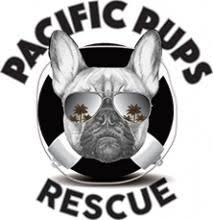 boxer dog adoption los angeles animal rescue in los angeles nkla