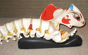spynamics sacro aligner back pain solutions welcome