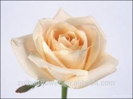 white roses for sale china white roses for sale wholesale alibaba