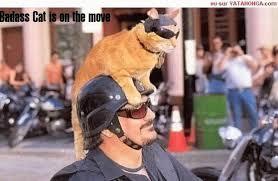 Meme Badass - badass cat is on cat meme cat planet cat planet