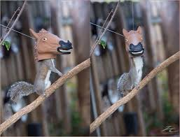 Meme Horse Head - so this exists horse head squirrel feeder meme guy