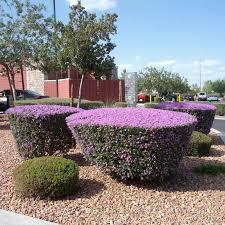 Fall Garden Plants Texas - flowering shrubs garden shrub flowering shrubs and gardens