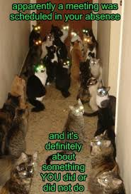 Crazy Cat Memes - crazy cat lady nightmare lolcats lol cat memes funny cats