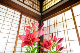 red lily flowers in japanese style room 和室の中の赤いユリの花