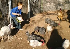 bringing up birds raising chickens and other backyard fowl