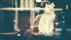amsterdam for cat lovers i amsterdam