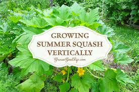 Growing Melons On A Trellis Growing Summer Squash Vertically