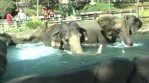 Vallejo Ca Six Flags Six Flags In Vallejo Relocates Elephants To 600 Acre Safari Park