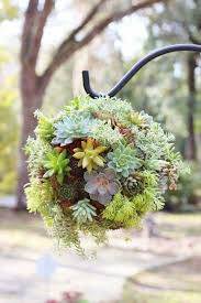 Hanging Succulent Planter by 2911 Best Beautiful Succulents Cacti U0026 Rare Plants Images On