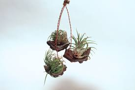 hanging planter textured air plant display 3 platforms with