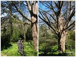 forest glade gardens melbourne