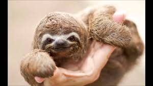 Dragon Sloth Meme - more baby animals that will make you go aww youtube