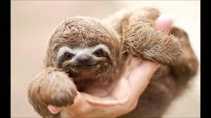 Sloth Jokes Meme - more baby animals that will make you go aww youtube