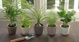 low maintenance indoor plants laurel green community