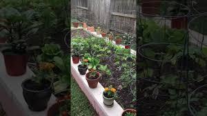 cinder block back yard vegetable garden youtube