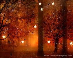 nature photography surreal lights woodlands autumn