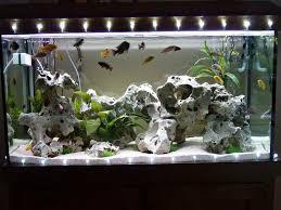 Good Aquarium Decorations consideration
