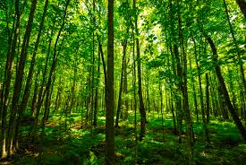 Forest growth increasing in countries with a higher quality of