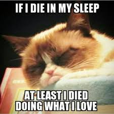 Grumpy Cat Sleep Meme - sleepy grumpy cat i do what i love and i really love to sleep