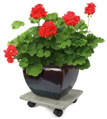 Plant Dolly Home Depot by Plant Caddies Protect Your Floors Make It Easy To Move Pots