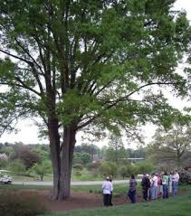 how do trees benefit me fairfax county virginia