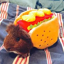in costumes best 25 animals in costumes ideas on puppies in
