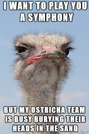 Ostrich Meme - judgmental ostrich meme on imgur