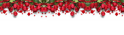 s day roses s day roses background s day