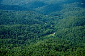 Oklahoma forest images The ozark mountains arkansas library road trip jpg