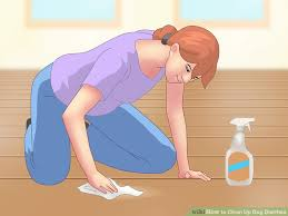 how to clean up diarrhea 10 steps with pictures wikihow