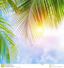 Palm Tree Wallpaper Palm Leaves Border Stock Photo Image 39673180