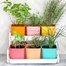 Herbs Indoors by Make A Colorful Indoor Herb Garden U2013 A Beautiful Mess