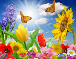 butterfly flower summer butterfly flowers sunlight rays color wallpaper