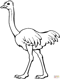 ostrich coloring page gif 2033 2652 illiterate pinterest