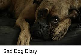 Sad Dog Meme - sad dog diary meme on me me