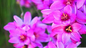 vibrant flowers hd desktop wallpaper high definition