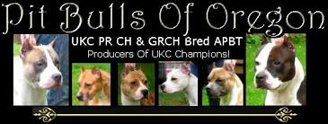 ukc american pitbull terrier pit bull breed history