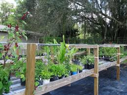 florida native plant nursery dudley farm historic state park in newberry fl near gainesville