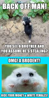Rodent Meme - rodent memes best collection of funny rodent pictures