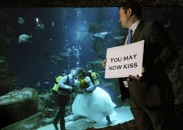underwater wedding getting married underwater at the beijing aquarium of the