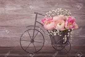 ranunculus flowers in a bicycle vase stock photo picture and