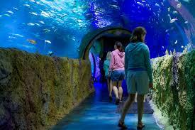 aquarium sea life aquarium rivercenter mall opening in 2018 jcutrer com