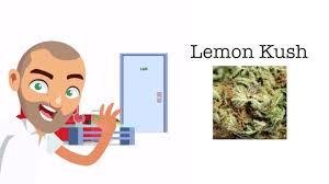 wedding cake leafly lemon kush strain review