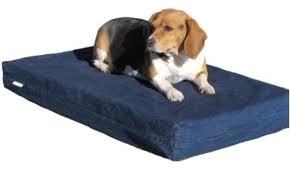 Foam Dog Bed Top 5 Indestructible Dog Beds U2013 A To Z Pet Care