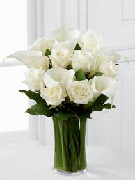 Calla Lily Vase Life White Flowers Green Leaves Pure And Clean Luxury White Rose