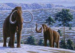 woolly mammoth encyclopedia